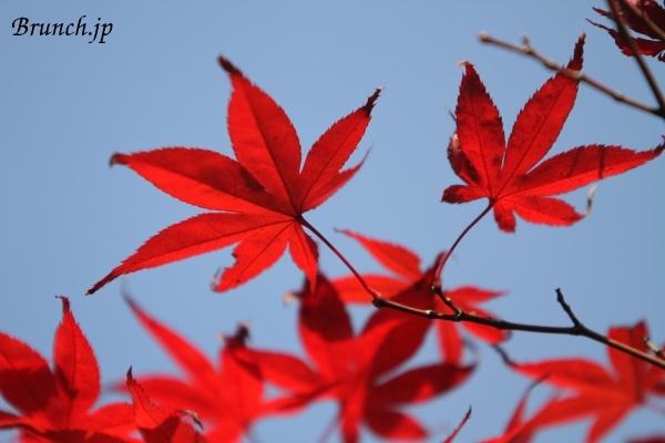 20111113_115900_33.jpg